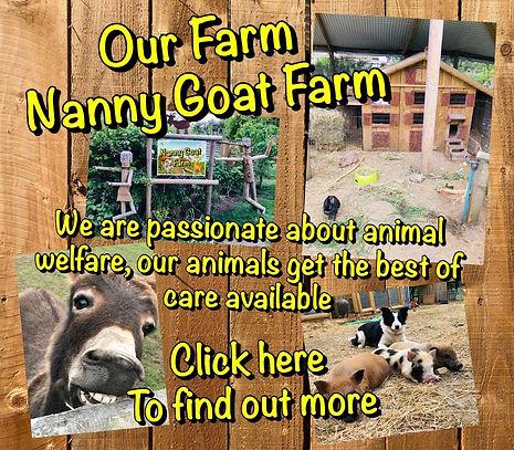 nanny goat farm.jpg