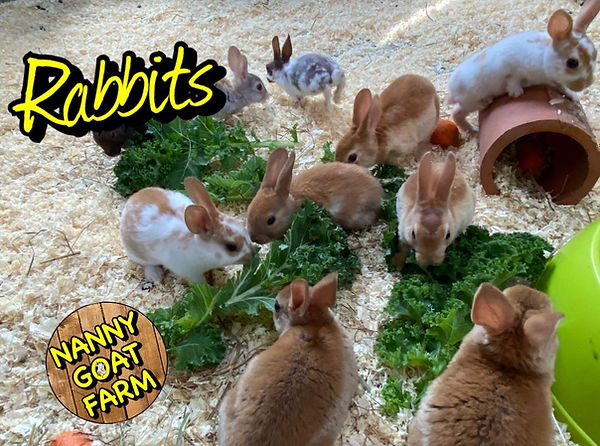rabbits ians farm.jpg