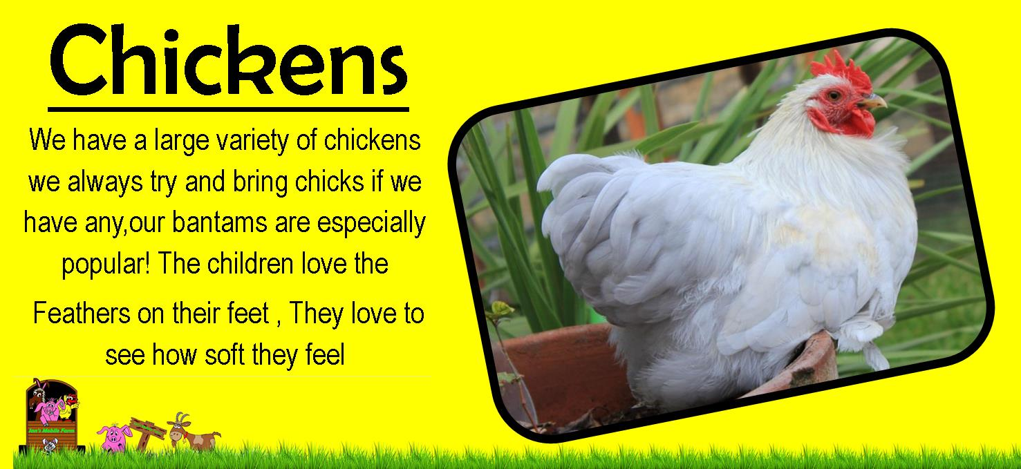 chicken pic,ians mobile farm We have a large variety of chickens we always try and bring chicks if w