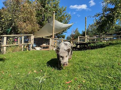 peppa pig ians farm.jpg