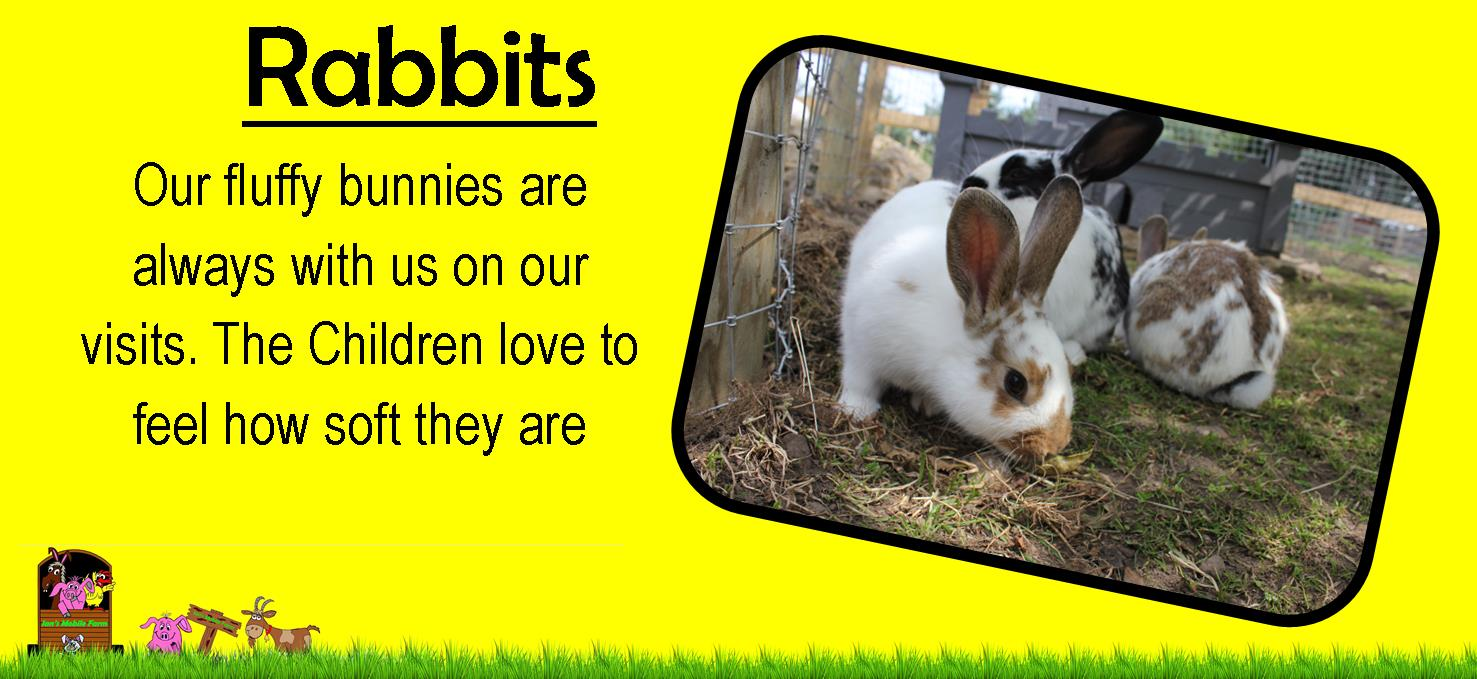 rabbits on ians mobile petting farm are a real fluffy hit, feel how soft they are, www.iansmobilefar