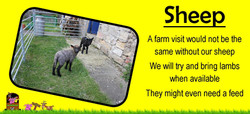 Ians farm sheep, Ians mobile farm.com we love our sheep on our petting farm yorkshire, they love to