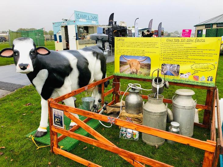 daisy cow milking1.jpg