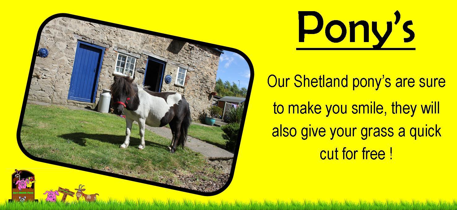 shetland pony's, ians mobile farm yorkshire our ponys will make you smile,www.iansmobilefarm.com