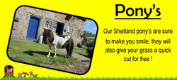 shetland pony's, ians mobile farm yorkshire our ponys will make you smile,www.iansmobilefarm.com