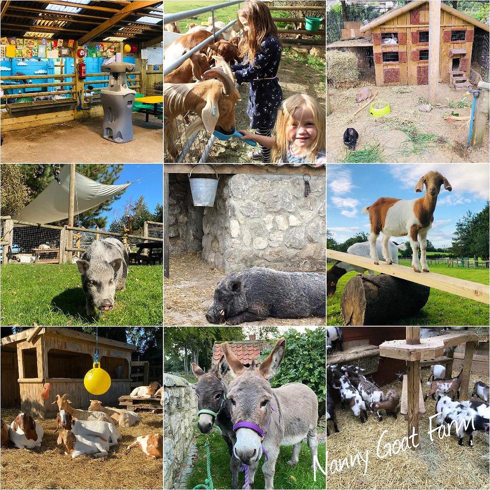 nanny goat farm ians farm.jpg
