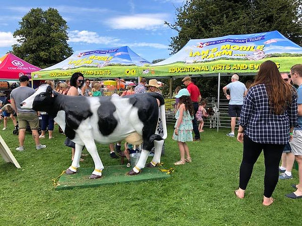 ians mobile farm event daisy cow.jpg