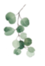 Eucalyptus-2nd-image.png