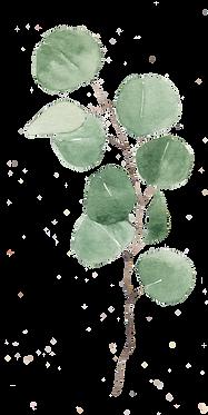 Eucalyptus-Favorite.png