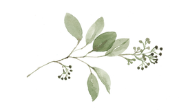 Seeded-Eucalyptus.png