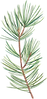 JanuaryBloom-Sophiasticated-Xmas-11.png