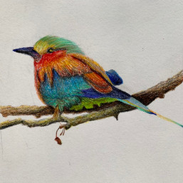 color pencil techniques workshop