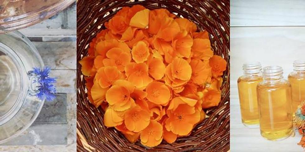 Découverte des plantes médicinales - cosmetique & soins naturels
