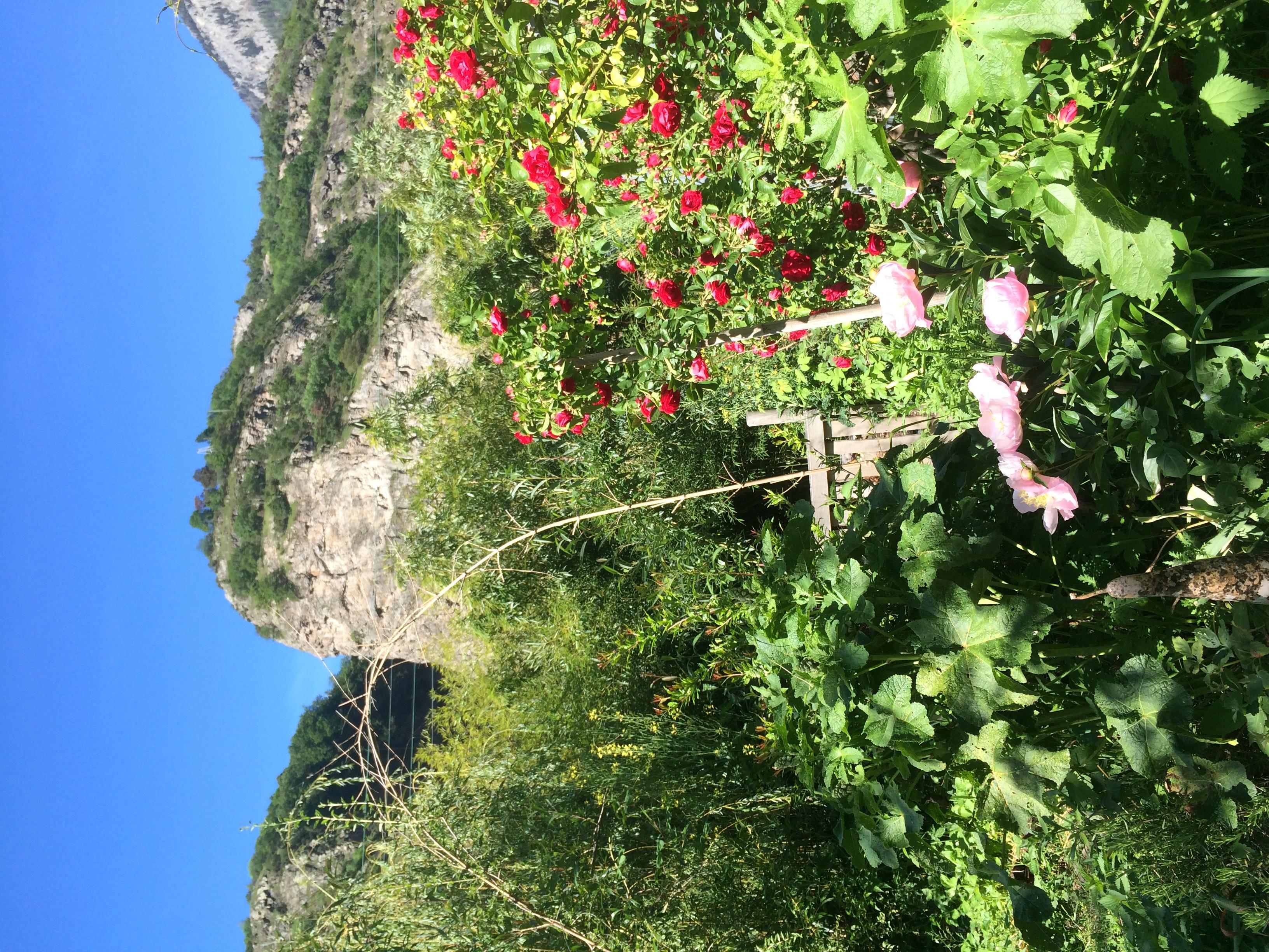 Des fleurs et des Gorges