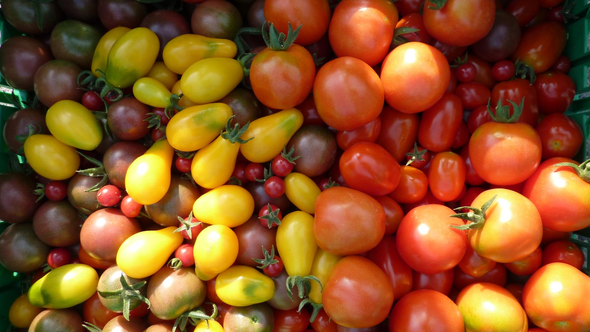 Assortiment de variétés de tomates