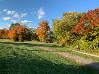 fall colours.jpeg