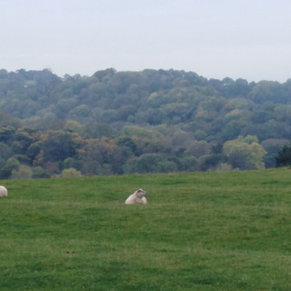 odette's sheep.jpg