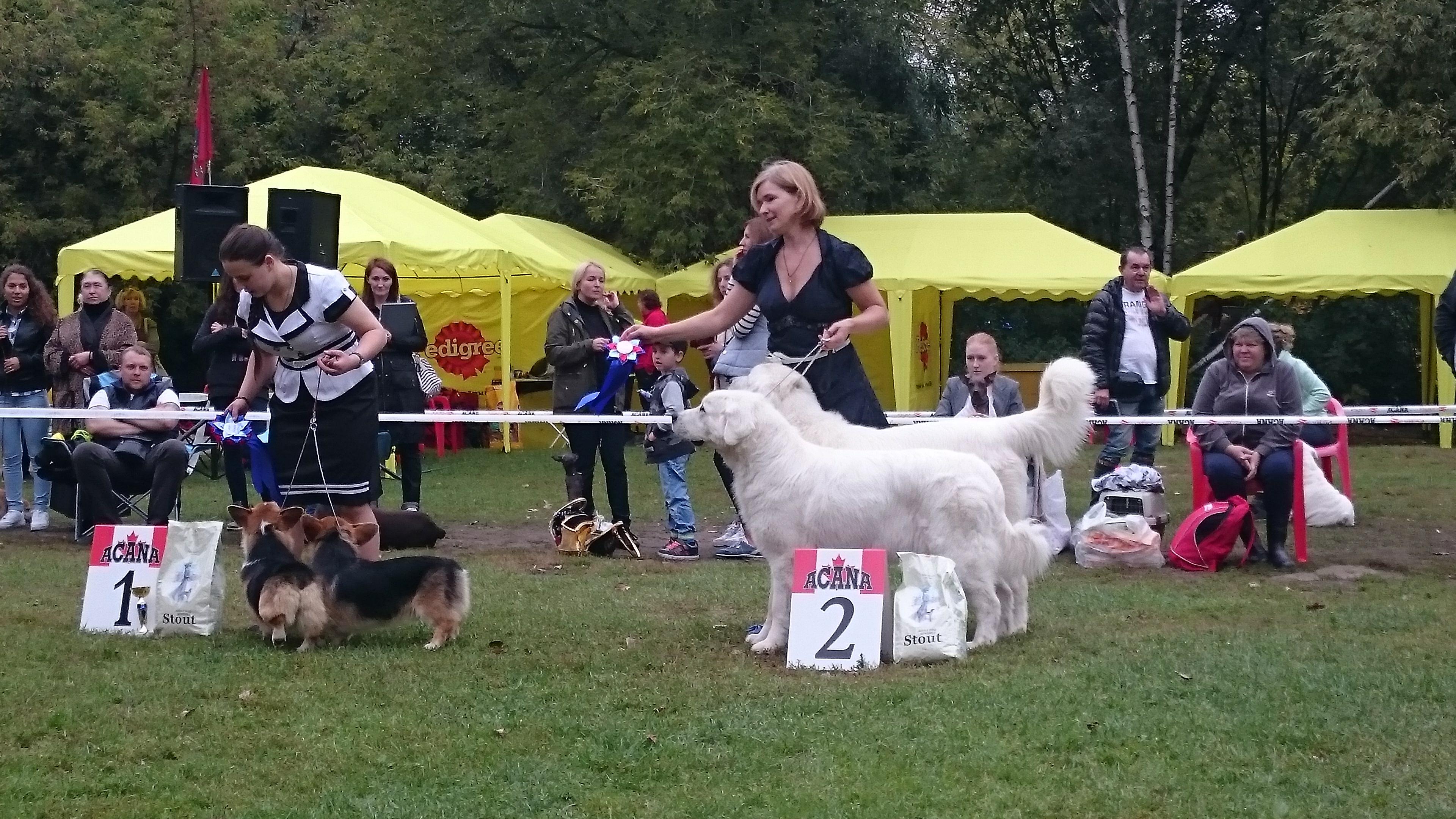 Zuzzu and Tsar. DogShow Antares.