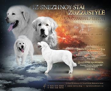 Помет Е Польская подгалянская овчарка