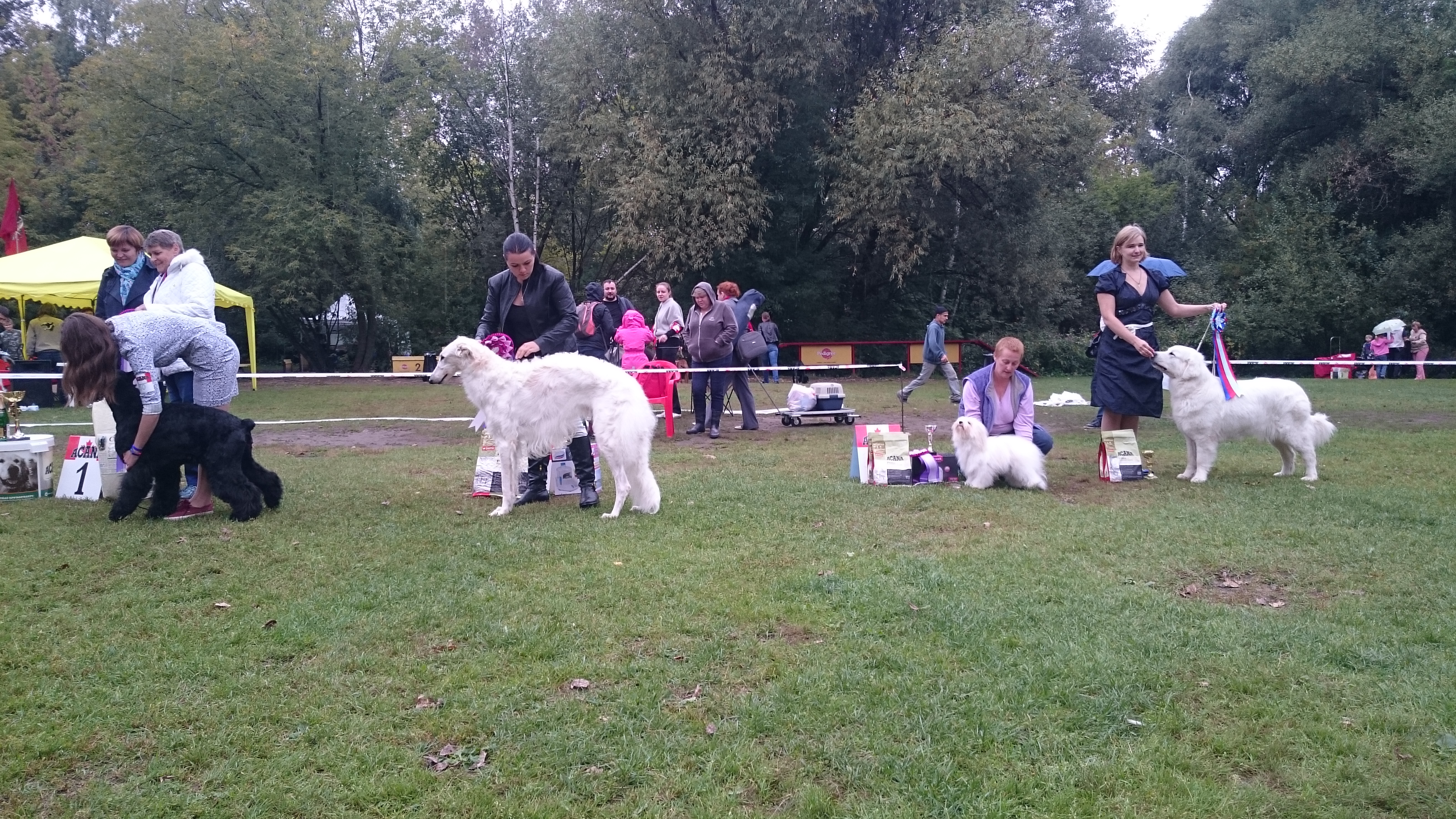 Zuzzu BIS 4th place DogShow Antares.
