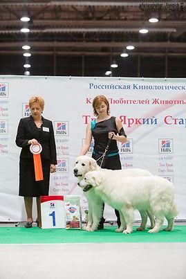 Польскаяподгалянская овчарка