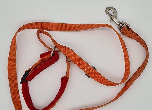 Orange Retrieverleine