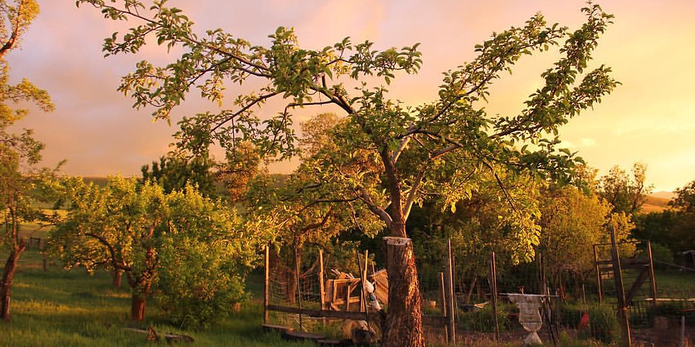 Montana Heritage Orchard Grafting Class