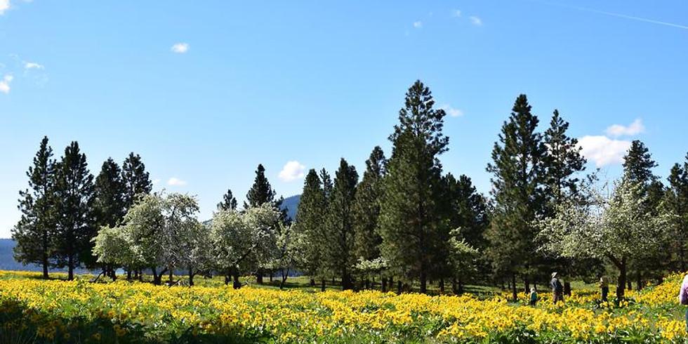 Montana Heritage Orchard Pop-up Tree Sale