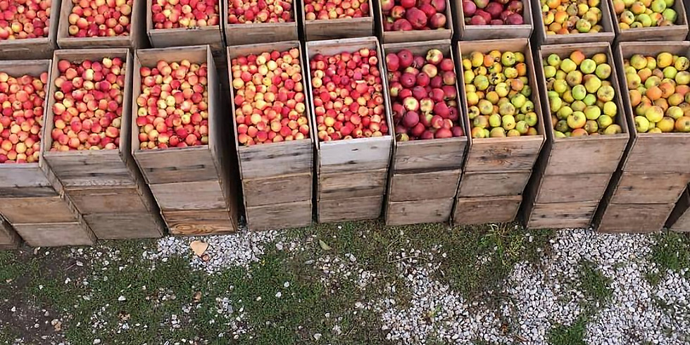 Budwood Growers Cooperative Meeting and Cider Share