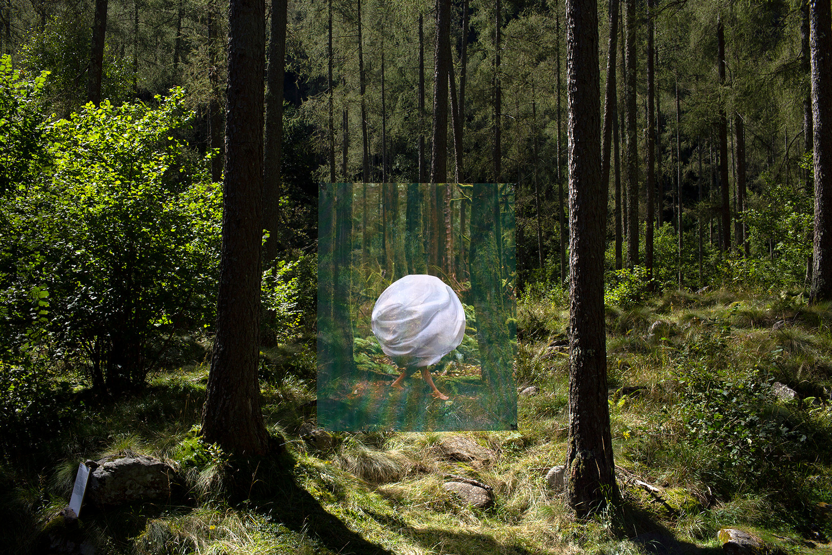 "Homebound Installation, 2020 49"" x 69"" Photograph printed on vinyl Forest installation in Switzerland Inquire for pricing"