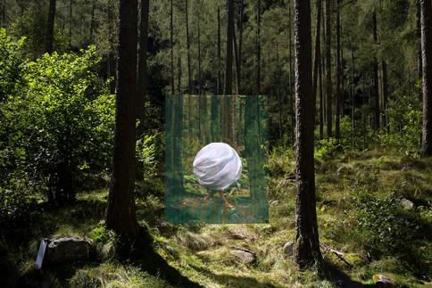 "Homebound Installation, 2020 49"" x 69"" Photograph printed on vinyl Forest installation in Switzerland Inquire for pricing"
