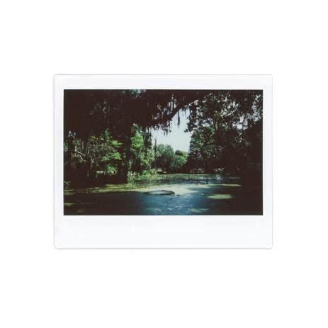 "Magnolia, 2019 Giclée Print Edition 1/50 8"" x 8"" $65"