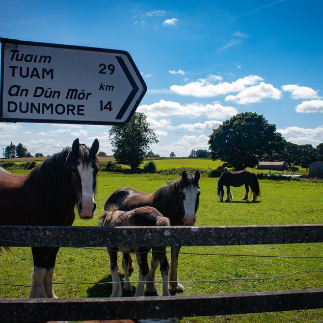 Horses Dunmore