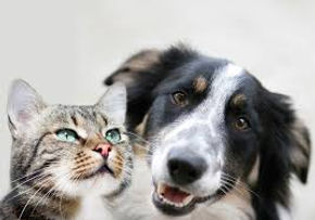 hond en kat grutterai.jpg