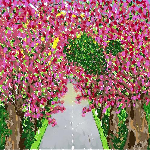 Japanese Cherry Tree Lane