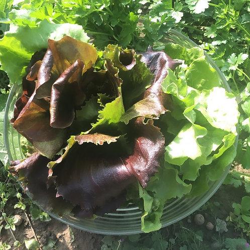 Bio zelena solata (sezonska), kos