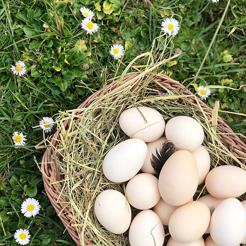 Bio jajca proste pašne reje, 10 kom
