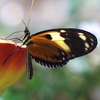 #nature #baterfly #butterfly #motyl #nat