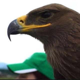 #eagle #greateagle #bird #animal #animal