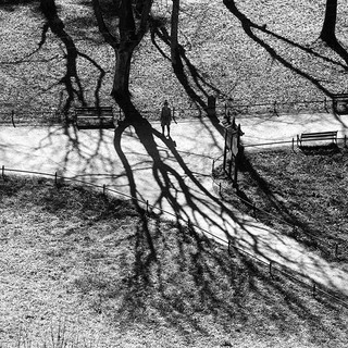 #bw #shadowhunters #shape #shadow #tree