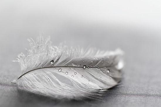 grey-feather.jpg