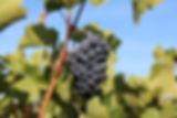 grape-3716718_640.jpg