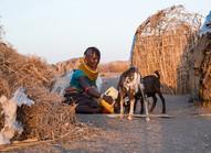 feeding goat livestock in lake turkana kenya