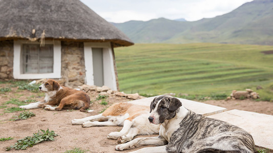 lesotho hut with dogs