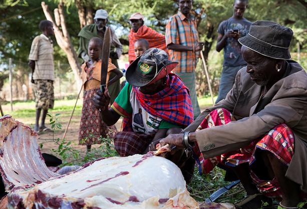 Samburu elders butchering cow at Kenya wedding