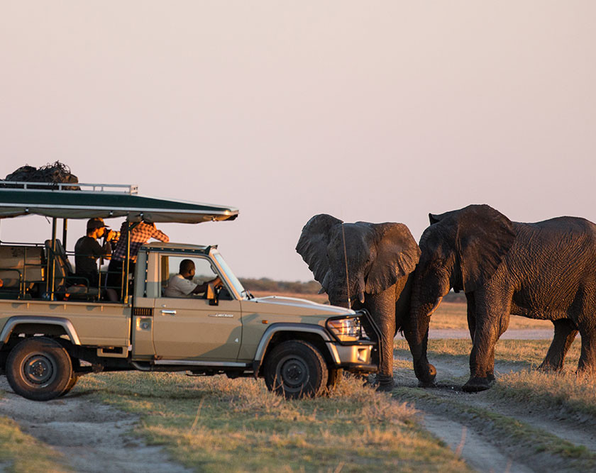 elephants beside safari vehicle in Kalahari national park Botswana