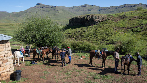 Mounting horses in lesotho