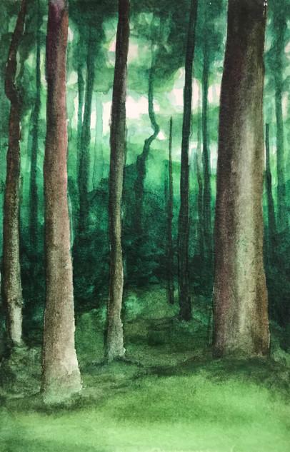 Woods - SOLD