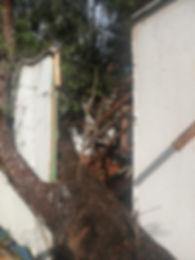 Bungalow Tree Close-up.jpg
