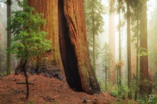 National Parks Web-13.jpg